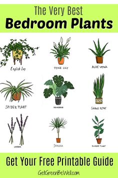 Free Printable with the Best Bedroom Plants for Better Sleep tonight! These are the inexpensive and pretty plants you want to add to your bedroom to clean the air, give off oxygen and absorb toxins. house plants Best Bedroom Plants for Better Sleep Inside Plants, Cool Plants, Green Plants, Good Plants For Indoors, Plants That Repel Bugs, Poisonous Plants, Best Plants For Bedroom, Plants For Room, Bedroom Plants Decor
