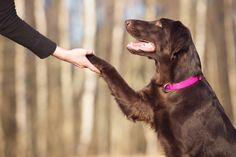 Speak Softly and Carry Lots of Treats: Seven Obedience Tips for a Well-Trained Dog