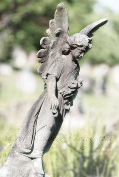 Rookwood Cemetery Sydney