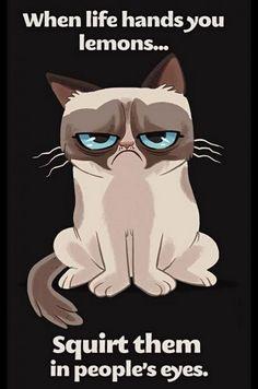 Grumpy cat lemons!!