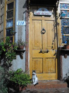 Yellow door with cat