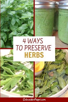 Preserving herbs is such a simple way to stock your pantry and save money at the grocery store. But dehydrating isn't the best way to preserve all herbs, some are better frozen. Learn how to preserve herbs 4 ways in this simple guide. Grow Your Own Food, Food To Make, Making Food, How To Store Tomatoes, Herb Garden Design, Garden Ideas, Herbs For Health, Pin On, Healing Herbs