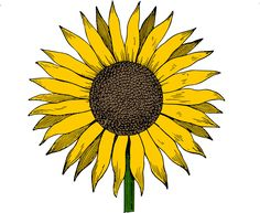cad_free_clip_art_sunflower_image_colored