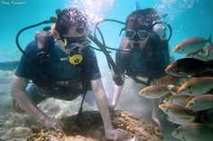 scuba+diving+coral | Scuba diving at Coral Island | Flickr - Photo Sharing!