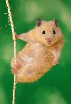 #hamster Mehr