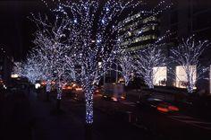 Christmas Tree LED Lights I just love Christmas.