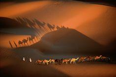 Caravane de dromadaires aux environs de Nouakchott, Mauritanie