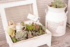 コレクションボックスをリメイクして、 多肉植物を寄せ植えしたプチガーデンです。  白くペイントされたボックスが、 植物たちを引き立ててくれていますね!