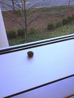 Roche nomade à l'hôtel avant sa sortie officielle. (Atlanta, États-Unis) Photo : Charles LeBlanc