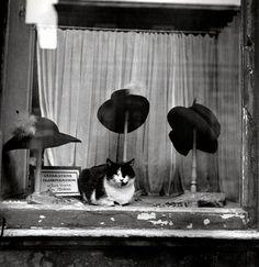 Le Chat Au Chapeau (Cat in the Hat) - 1937 - Paris - Photo by Brassaï - @~ Mlle