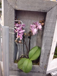orchidea in a frame.i think it's wonderful!