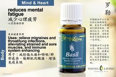 Young Living Basil 羅勒  https://www.youngliving.com/signup/?isoCountryCode=US&sponsorid=1704613&enrollerid=1704613