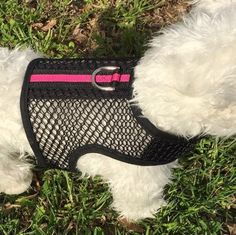 New breathable mesh small dog harnesses will keep your pup cool in the Summer heat!