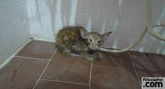 Così Pokemon Go ha salvato la vita a un gattino | FbSocialPet.com Puoi conoscere il cuore di un uomo già dal modo in cui egli tratta gli animali! #Iloveanimals #Ilovepets #iostoconFbSocialPet #FbSocialPet Rimani aggiornato su FbSocialPet.com