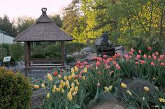 Tulipes dans le jardin zen