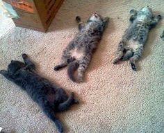 pets dormindo