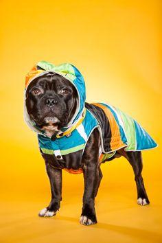 Jeg har mange forskjellige bakgrunner å velge mellom. Få et spennende og annerledes bilde av hunden din. Med farger kan vi skape kontrast eller harmoni og tilpasse uttrykket til din hund. Types Of Animals, Staffordshire Bull Terrier, Family Dogs, Bird Feeders, Animal Kingdom, Pet Care, French Bulldog, Pitbulls, Fine Art