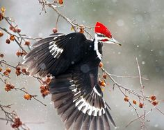 Pamela Underhill Karaz's incredible Pileated Woodpecker shot was one of the top 100 photos from this year's Audubon Photography Awards.