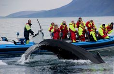 Visit Gentle Giants Whale Watching on your trip to Husavik • See ...