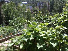 Garden delight..