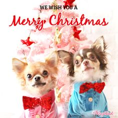 WOOFLINK - Hip designer dog clothes: WE WISH YOU A MERRY CHRISTMAS ♥