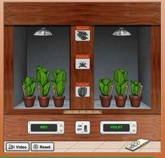 simulation screen