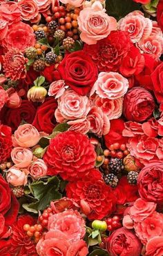 New Flowers Red Roses Nature Ideas Coral Roses, Red Roses, Deco Floral, Floral Wall, Flower Aesthetic, Flower Backgrounds, Beautiful Roses, Pretty Flowers, Planting Flowers