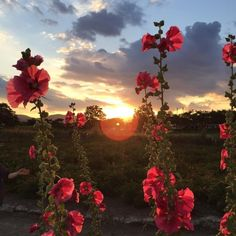 Image about nature in flores ? by Maryannel Leyva Leon Nature Aesthetic, Flower Aesthetic, Red Aesthetic, Aesthetic Pictures, Hipster Vintage, Style Hipster, Beautiful Flowers, Beautiful Places, Flowers Nature