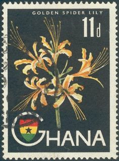 Golden spider Lily , Lycoris aurea , Lycoris africana, Hurricane lilies or Cluster amaryllis. Postage stamp from Ghana,circa 1994.