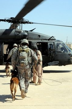 Military Working Dogs: More Than a Man's Best Friend - One thing we know all too well these days is that post-traumatic stress disorder, or PTSD, is all around us. As we honor and remember our fallen military personnel this Memorial Day, one can't help but think about the state of a service man or service woman's state of mind in this age of war and loss ...