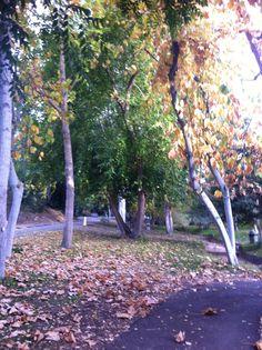 UCR botanical garden