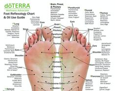 10 Pack - MINI Essential Oil Reflexology Chart & Oil Use Guide x on card stock Essential Oil Chart, Essential Oil Uses, Doterra Essential Oils, Acupressure Massage, Foot Reflexology, Foot Pressure Points, Foot Chart, Reiki Room, Essential Oils