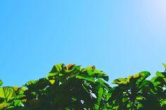Céu e Terra on Flickr. Céu e Terra