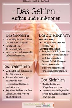 Das Gehirn: Aufbau, Funktionen, Krankheiten und Training The Brain: Building Functions Diseases and Training # Healthy Psychology Careers, Behavioral Psychology, Color Psychology, Developmental Psychology, Psychology Experiments, Educational Psychology, Health Psychology, Health Cleanse, Learn German