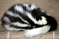 Skunks (also called polecats in America) are known for their ability to spray a liquid with a strong odor. Appearances vary from black-and-white to brown or cream colored, but all have warning coloration.Skunks are omnivorous, eating both plant & animal material& changing their diets as the seasons change. They eat insects & larvae, earthworms, grubs, small rodents, lizards, salamanders, frogs, snakes, birds, moles, eggs, berries, roots, leaves, grasses, fungi, and nuts.