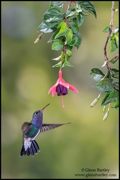 Glenn Bartley Nature Photography - Brazil 2013