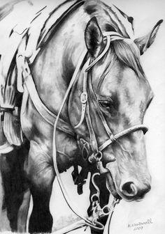 Repro of Quarter Horse by Ryerd.deviantart.com on @deviantART