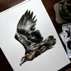 There is a fine line soon this will decide to be finished or I'll break through the paper... #eagle #baldeagle #juvenile #bird #process #wip #diy #art #artist #nature #wild #creature #watercolour #watercolor #paint #art #illustration #expression #mediation