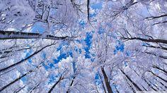 neige_arbre hiver.jpg (Image JPEG, 1600×900 pixels) - Redimensionnée (78%)