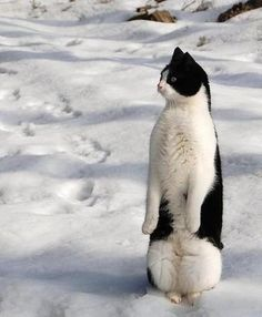 I am a Penguin pose.
