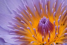 ~~ water lily ~~