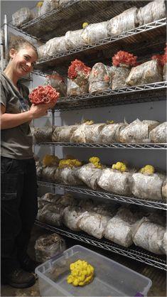 Starting a Mushroom Farm Business: 3 Needed Steps for Mushroom Farming Growing Mushrooms At Home, Garden Mushrooms, Edible Mushrooms, Stuffed Mushrooms, Wild Mushrooms, Grow Your Own Mushrooms, Mushroom Compost, Mushroom Spores, Mushroom Cultivation