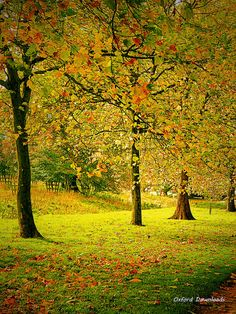 Stowe Buckinghamshire Autumn Trees Nature by OxfordDownloads
