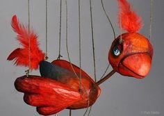 Red bird Marion...