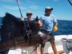 Sailfish on a fly rod - this world record class 150 lb. fish just prior to release.