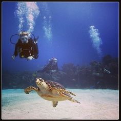 Such great fun being in the presence of turtles. This was photographed by PADI Instagram follower @alexslepica on a recent dive.