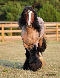 Green Country Gypsy Horses   Icor