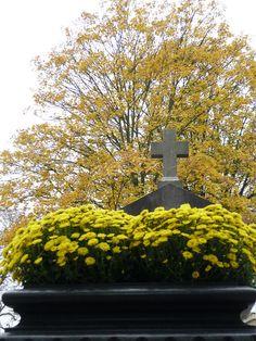 Pour la Toussaint, les cimetières parisiens spécialement fleuris http://www.pariscotejardin.fr/2013/11/pour-la-toussaint-les-cimetieres-parisiens-specialement-fleuris/
