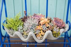 Wow! The colors in this succulent arrangement are amazing!