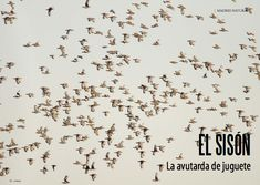 Es Madrid no Madriz Magazine Fauna, Madrid, Arabic Calligraphy, Natural, Art, Arabic Handwriting, Craft Art, Kunst, Arabic Calligraphy Art